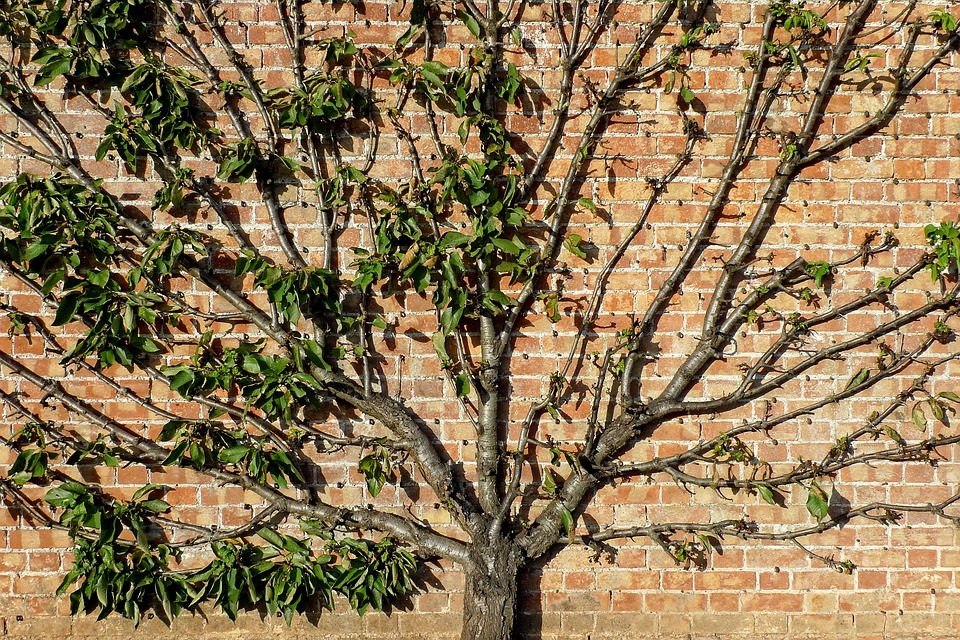 The Difference Between Pruning And Trimming